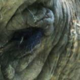 『象牙の消費』の画像