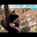 パンダ「笹食ってる場合じゃねえ!」