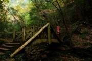ワイがコンデジで撮った紅葉+渓谷(滝)の写真をうpしてやんよ