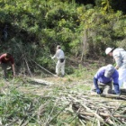 『11月15日 森林づくり活動』の画像