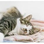 ロシア人「猫が凍ってたから解凍してみたwwww」→