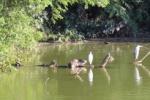 いくつかの動物が共存する池~倉治2丁目あたり通称「時計台の池」のところ~
