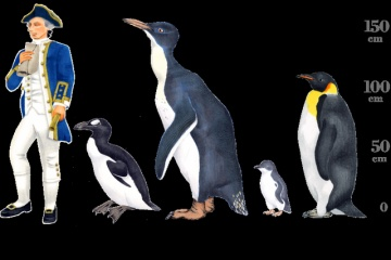 古代の巨大ペンギン 恐竜と同じ時代に地球上に存在していたことが判明