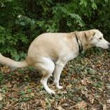 『「閑坐聴松風」犬が排便する時にくるくる回る理由』の画像