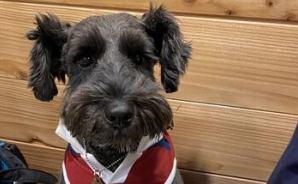 「人犬平等」を訴えるワンコ