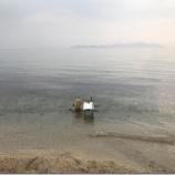 『小鮎と遊ぶ 28(2019/4/6 北小松)』の画像