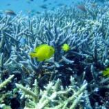 『【2017】タオ島で、ダイビングライセンス取得!!【ショップ比較あり】』の画像