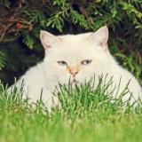 子供の頃しゃべる猫が家にいたんだけど、その猫とある約束をした
