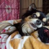 『愛犬とおうち時間🐾宝探しゲーム♪ 📝』の画像