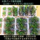 SONO水草パックの販売速報(メイクマン具志川店:2020.2/26~)