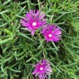 『【朝のご挨拶】市内のあちらこちらでお花を見かけるまち・戸田市。これもこのまちの居心地の良さをつくる特徴のひとつだと思います。』の画像