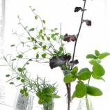『グリーンと花のある暮らし! 庭の植物を一輪挿しで楽しむ!!』の画像