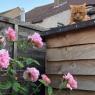 美しいバラ園を見た後の、我が家の箱庭