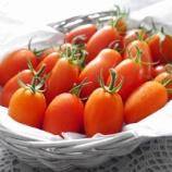 『ポタジェガーデンでトマトの収穫 & バラとハーブと庭木の様子』の画像