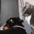 ネコと犬が仲良く遊んでいた。その隣で飼い主が「死んだフリ」をする → こうなった…