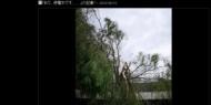 【画像】佐藤藍子、千葉の自宅に倒木 台風の生々しい爪痕に「言葉が出ない」
