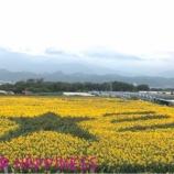 『続・sunflower〜お出かけの巻〜』の画像