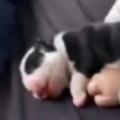 子イヌたちと赤ちゃんがお昼寝中。ぺったりスヤスヤ♪ → しあわせな時間はこんな感じ…