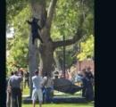 【画像】麻酔銃を撃ち込まれたクマの奇蹟の1枚
