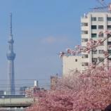 『【写真】Xperia5 - 平井の桜』の画像