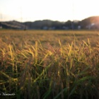 『『実りの秋』神石高原町』の画像
