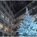 NYグランドセントラル駅発祥オイスター(牡蠣)バーでクリスマス&東京イルミネーション