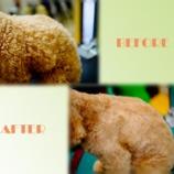 『シャンプーの頻度は?トイプードルは2週間に1回のシャンプーがオススメです』の画像