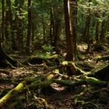『【闇の世界】樹海で私を助けてくれた声の主』の画像