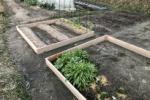 全くの農業ど素人が開墾して野菜を作って収穫してみた!〜京壬生菜がフレッシュ過ぎてまるでヌードルだ!〜