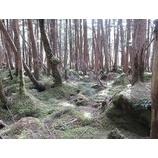 『好天に恵まれた山歩き。森からパワー頂いてきました!』の画像