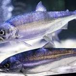 『「幻の魚は生きていた」1……問題提起文とその答えにあたる文の探し方をおさえよう』の画像