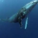 『クジラの美しい唄』の画像