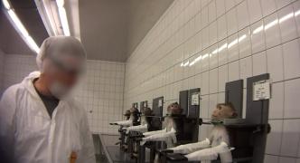 動物実験施設で犬や猿に暴力的な実験「犬は殺されるために檻から出されても尻尾を振っていた」活動家が潜入し撮影  ドイツ