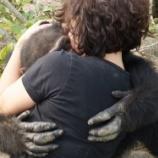 『愛を求めるチンパンジーのハグ』の画像