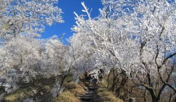 【美景】霧氷が美しい冬の神奈川県丹沢の風景をご覧くださいwwwwwww