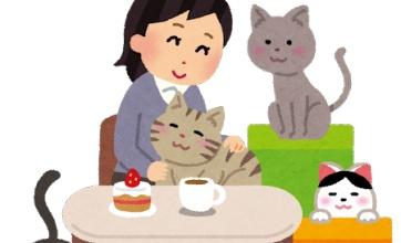 【衝撃】猫は賢いのでやってはいけない行為をこうやって教育できる!でも、ついつい可愛いから許してしまうってのもありますよねw