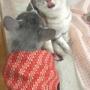 毎日事件が起きても猫との暮らしは最高~♪