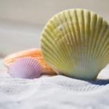 『貝が固い殻で身を守ってるのに余裕で食われまくる謎』の画像