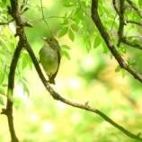 『坐禅ほんとうの初心者が座禅3日目に小鳥の声で気づく』の画像