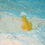石垣島ダイビングブログ