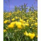 『青と黄』の画像