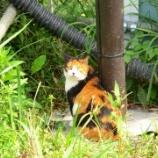 『現場猫(4)』の画像