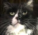 猫も「家の中にとどめて」 新型ウイルス対策、獣医が推奨