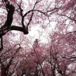 『下呂温泉旅行③~高遠城址公園へ🌸』の画像