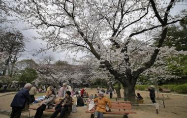 『LAOWA7.5mmF2で巡る哲学堂の桜2 2019/03/28』の画像