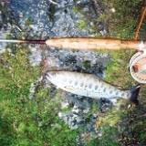 渓流釣りに興味のあるお客さんのサムネイル
