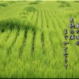『まばらな茂り』の画像