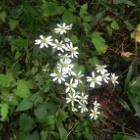 『下蒜山 初秋の花』の画像