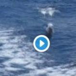 『イルカのサーフィン 素敵だね!♡』の画像