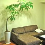 『【インテリア】大きめの観葉植物がある部屋の参考画像集【実例】 1/3 【インテリアまとめ・インテリアブログ 人気 】』の画像